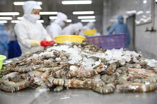 Minh Phú opposes US anti-dumping duty on frozen shrimp