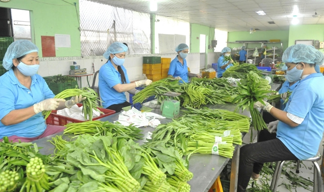 Fruit vegetable exports expected to revive after 9-month slump