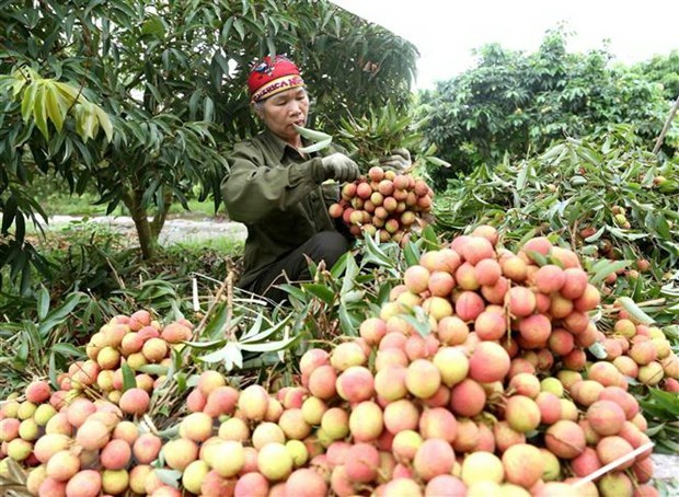 VN fruit vegetable exporters need to be on top of Chinese policy changes: conference