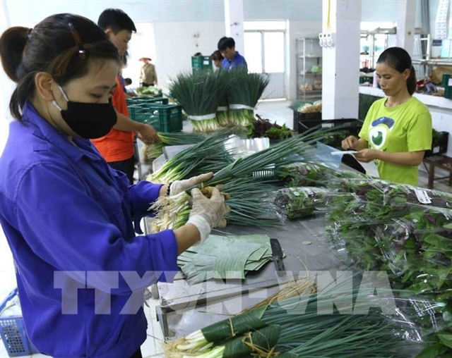 Hà Nội to boost collective economy