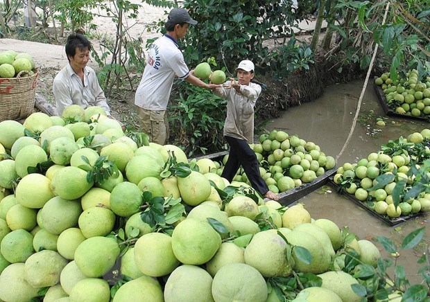 Chile opens door for Việt Nam's pomelo