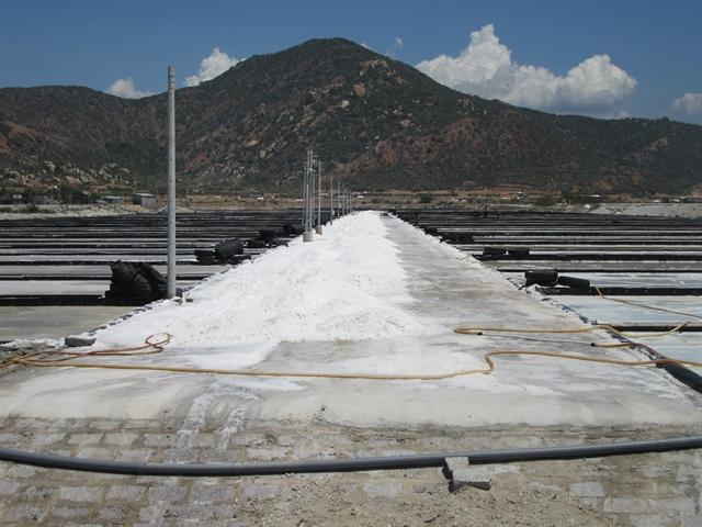 Ninh Thuận to become countrys top salt producer