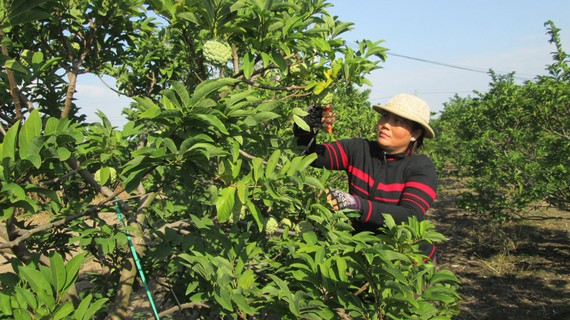 Tây Ninh Province to continue looking for investment in agriculture