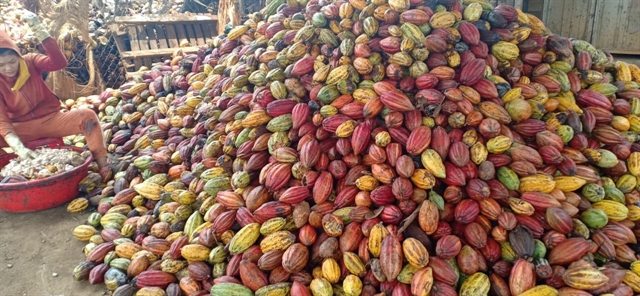 Việt Nam needs focus on quality cocoa: experts