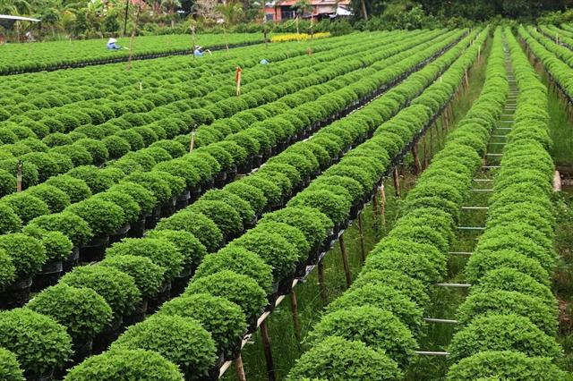Đồng Tháp flower ornamental plant output surges