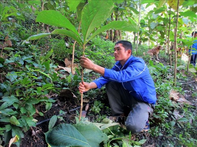 Young activists plant trees to prevent floods landslides