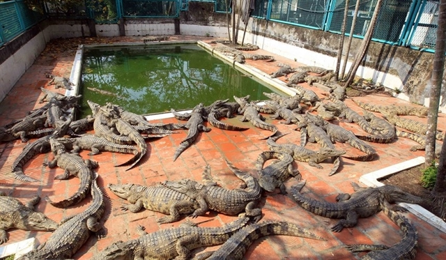 Thousands of wildlife farms in Việt Nam threaten biodiversity