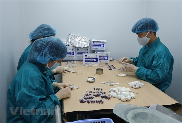Việt Nam mulls human trials of COVID-19 vaccine late this month