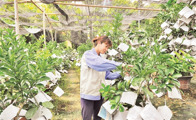 Hà Nộis agriculture strives to achieve growth target