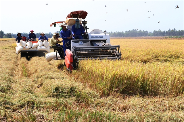 Đồng Tháp expands high quality rice cultivation
