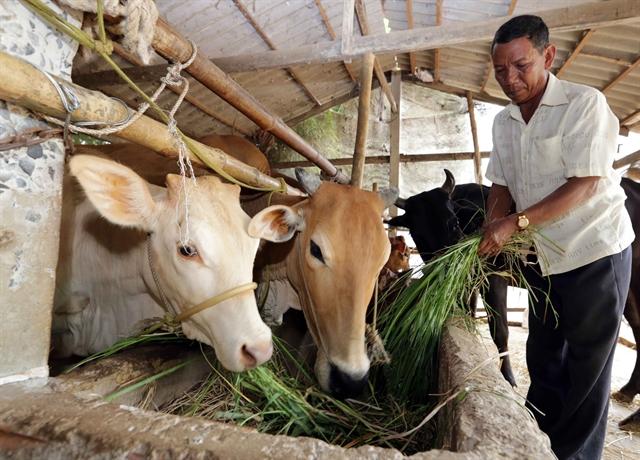 Trà Vinh spends billions of đồng on improving minority groups life