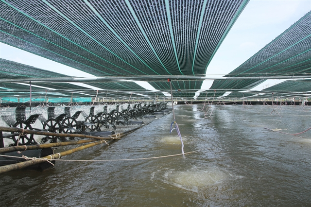 Sóc Trăng shrimp farming area to remain unchanged in 2021