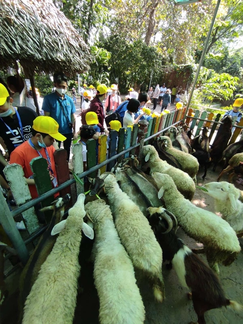 Tết tour season hit by COVID-19 fears