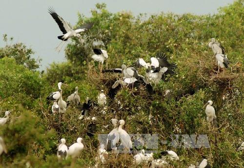 Cửu LongRiver Delta faces decline inwild birds fish and plants