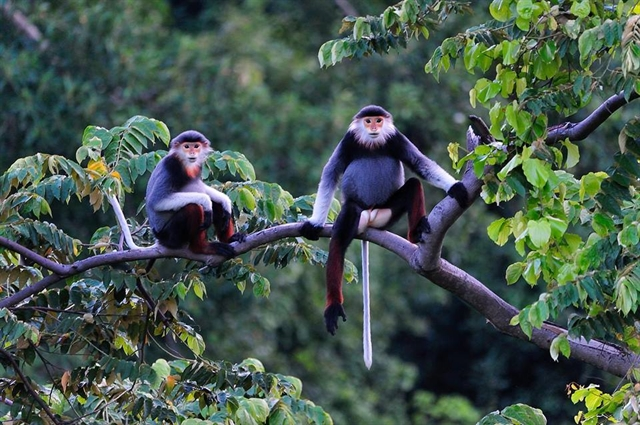 European Union funds biodiversity conservation project in central VN