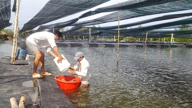 Cần Giờ has enormous potential for high-value aquatic products swift nests