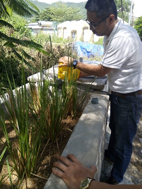 Central city pilots vetiver grass waste treatment system