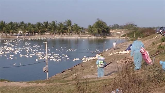 Hải Phòng reports first case of avian flu A/H5N6