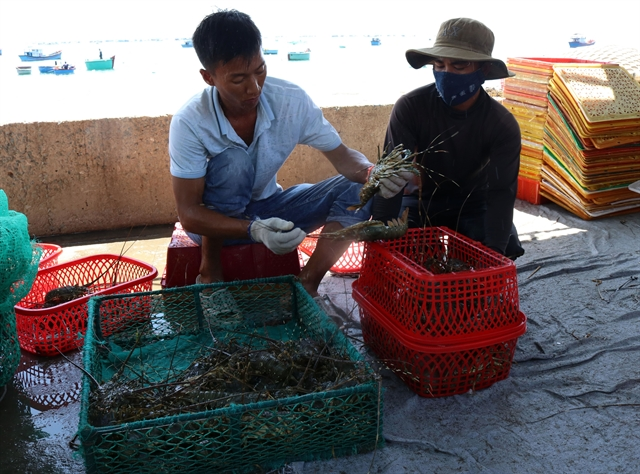 Ninh Thuận works towards sustainable sea-based aquaculture