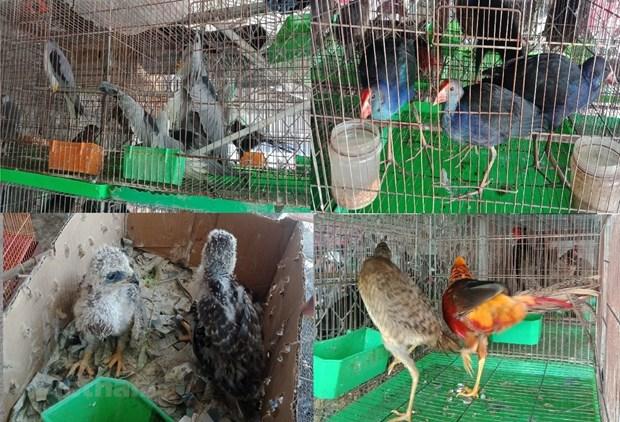 Việt Nam to keep close eye on wildlife import sale
