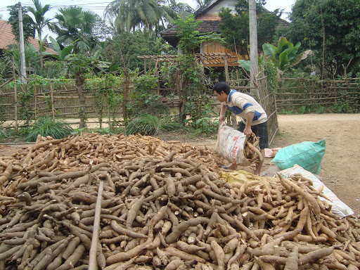Việt Nam sees cassava export reduction in two months of 2020
