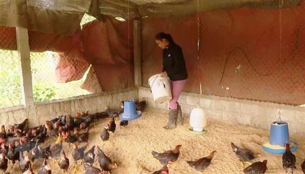 Localities put on alert for livestockdiseases