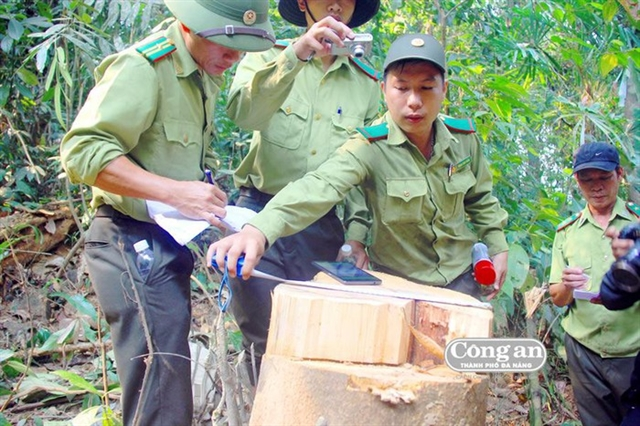 Quảng Nam to investigate illegal deforestation