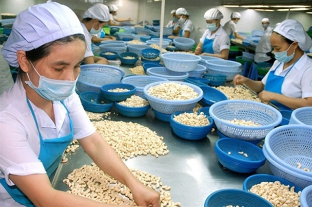Việt Nams cashew exports to US up in two months