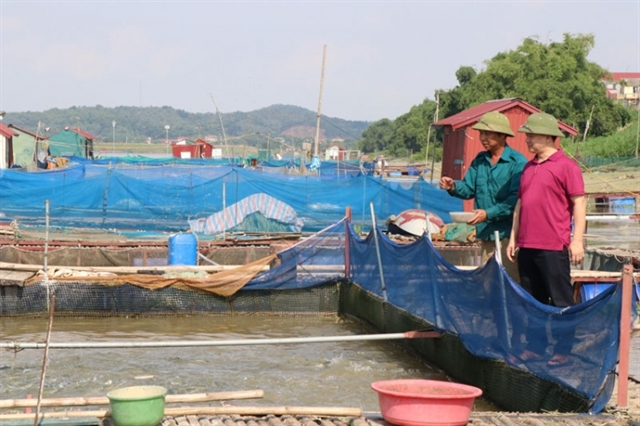 Oxygen depletion causes fish deaths in Bắc Ninh