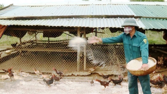 Thanh Hoá reports no new cases of avian influenza