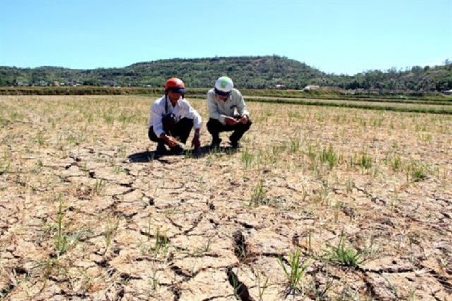 Central region faces water shortage for summer-autumn crop