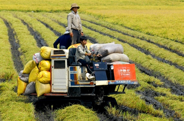 An Giang programme for producing rice seeds continues to attract farmers
