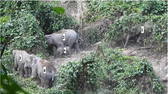 Herd of endangered elephants found in Quảng Nam Province