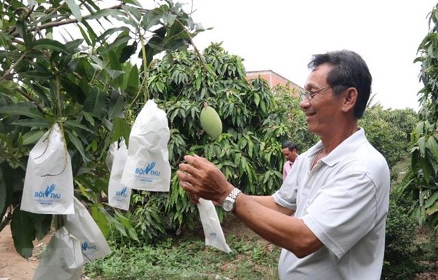 Tiền Giangs Q1 fruit exports up 20.3%