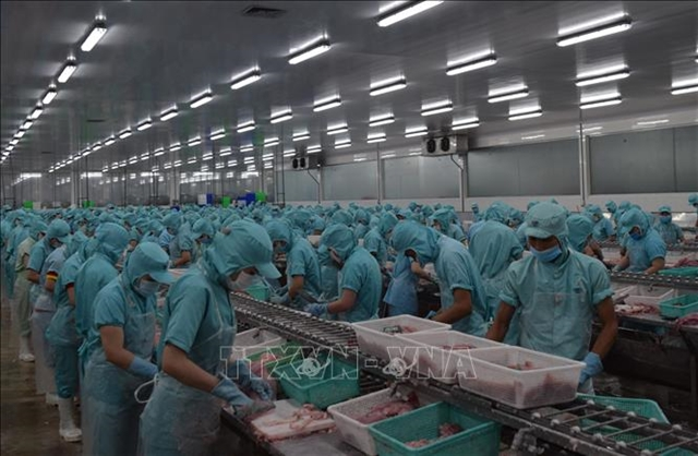 Đồng Tháp helps fish exporters amid lower demand during COVID-19