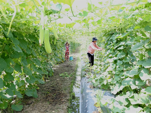Cần Thơ to speed up agricultural production