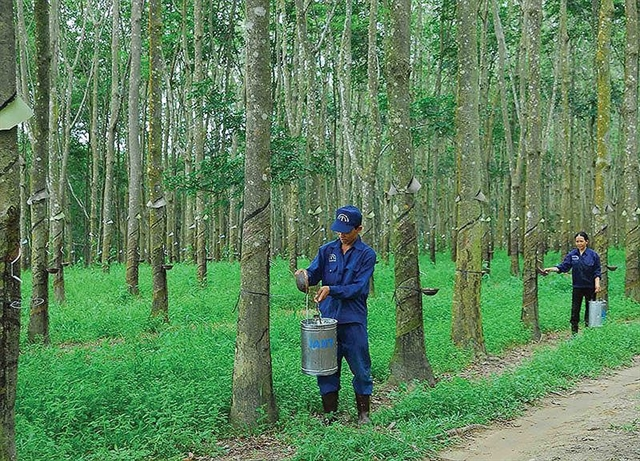 Asset sales bring profits to natural rubber firms not their farms