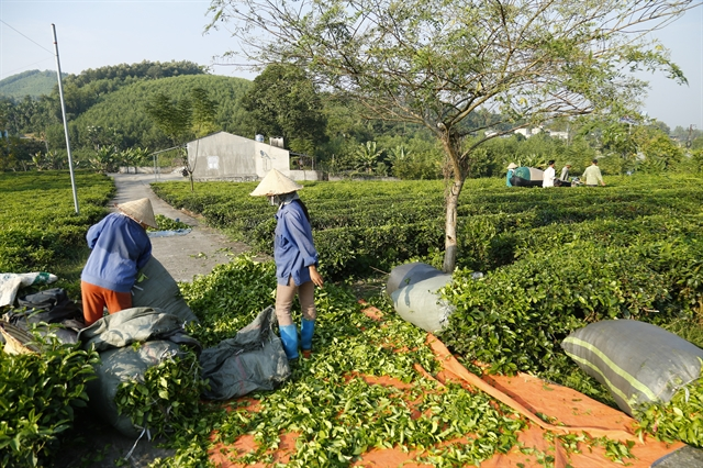 Việt Nam to adopt anti-forced labour convention extend agricultural land use tax incentive: NA