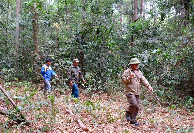 Bình Phước tightens forest protection in dry season