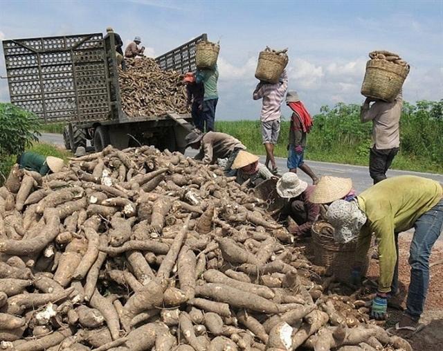 Cassava exports recover in Q1