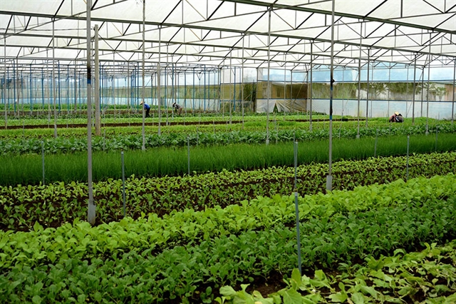 Bà Rịa-Vũng Tàu Province applies high-tech agriculture to improve quality yield