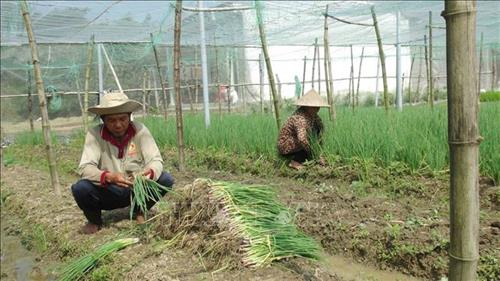 Trà Vinh Province uses loans to lift its Khmer populace out of poverty