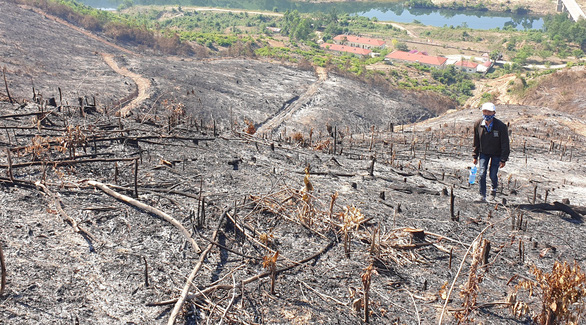 Forest manager involved in Quảng Nam severe forest fire