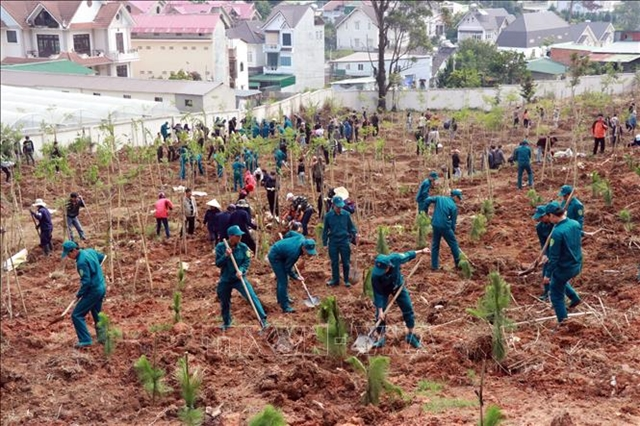 Tree-planting campaigns launched to mark President Hồ Chí Minhs birthday