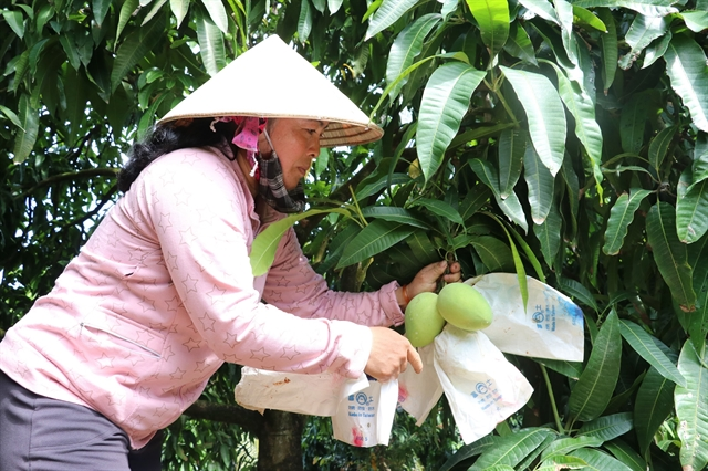 Đồng Tháp grants code for 133 fruit-growing areas for export