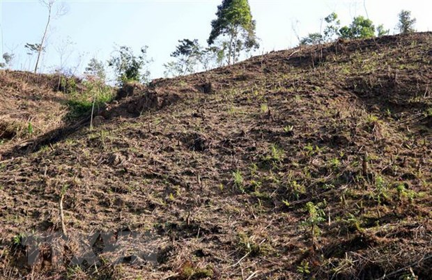 Tuyên Quang faces large deforestation