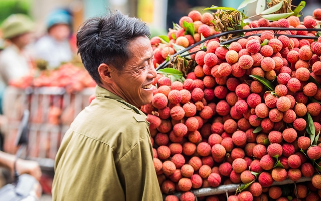 Bắc Giang seeks for more chances for exporting lychees to Singapore