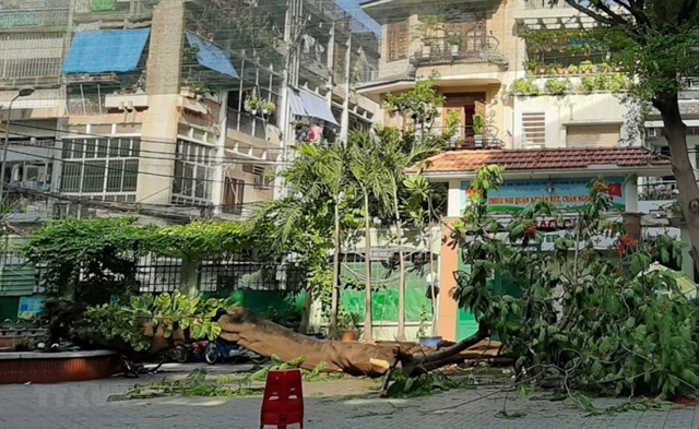 One student killed 12 injured as tree falls at school