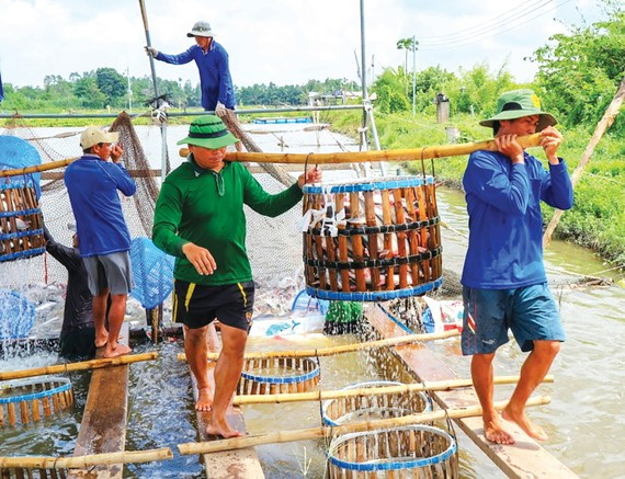 Hậu Giang focuses on closed agricultural production chains