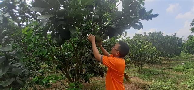 Bà Rịa – Vũng Tàu Province embraces organic farming